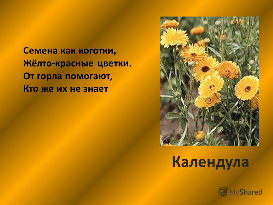 Семена как коготки, Жёлто-красные цветки. От горла помогают, Кто же их не знает Календула