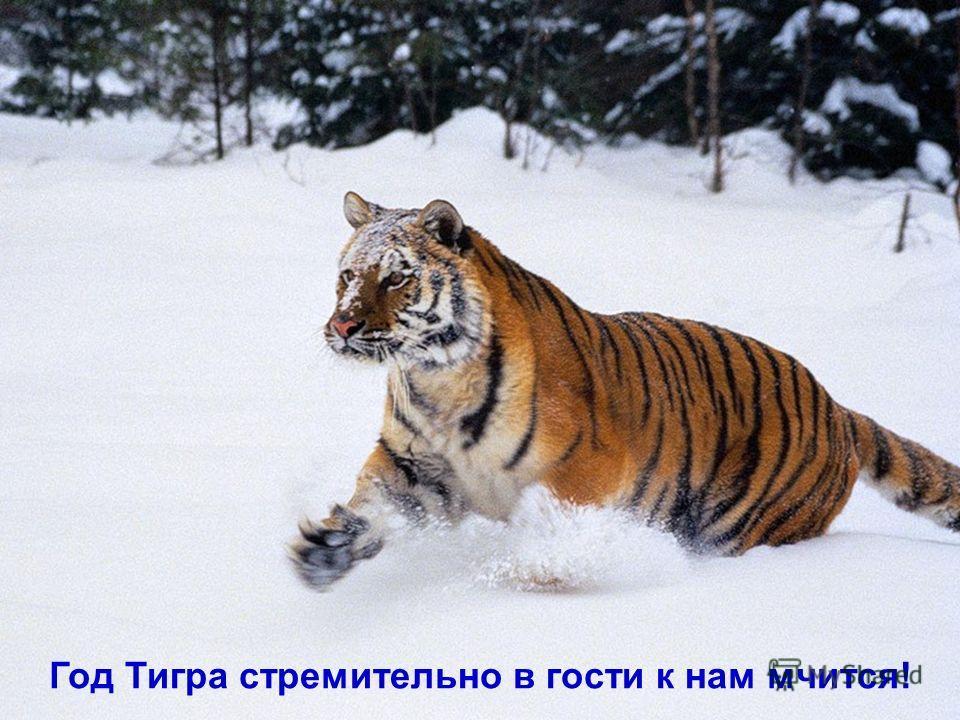 Год Тигра стремительно в гости к нам мчится!