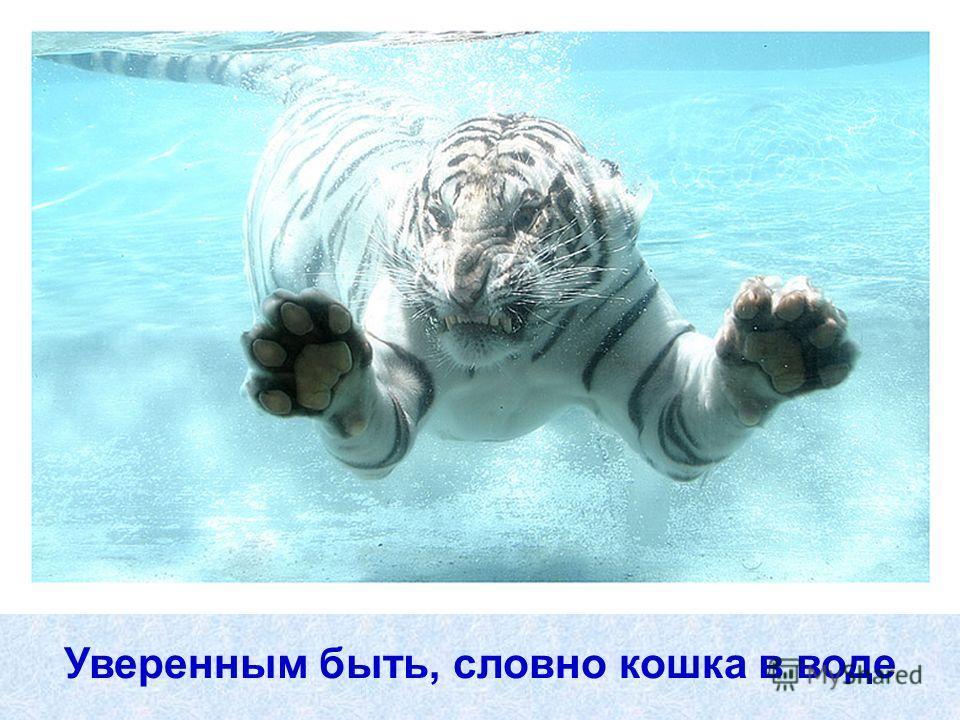 Уверенным быть, словно кошка в воде