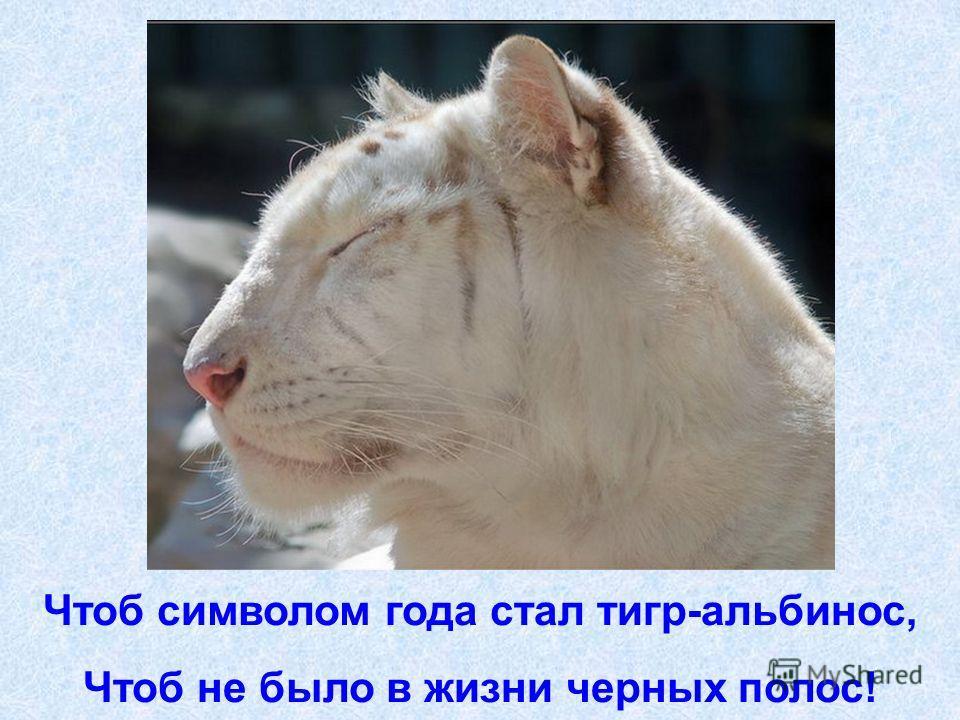 Чтоб символом года стал тигр-альбинос, Чтоб не было в жизни черных полос!