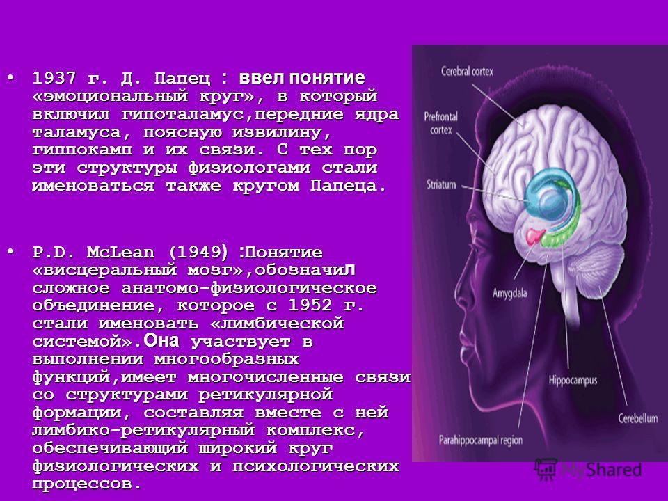1937 г. Д. Папец : ввел понятие «эмоциональный круг», в который включил гипоталамус,передние ядра таламуса, поясную извилину, гиппокамп и их связи. С тех пор эти структуры физиологами стали именоваться также кругом Папеца. 1937 г. Д. Папец : ввел пон