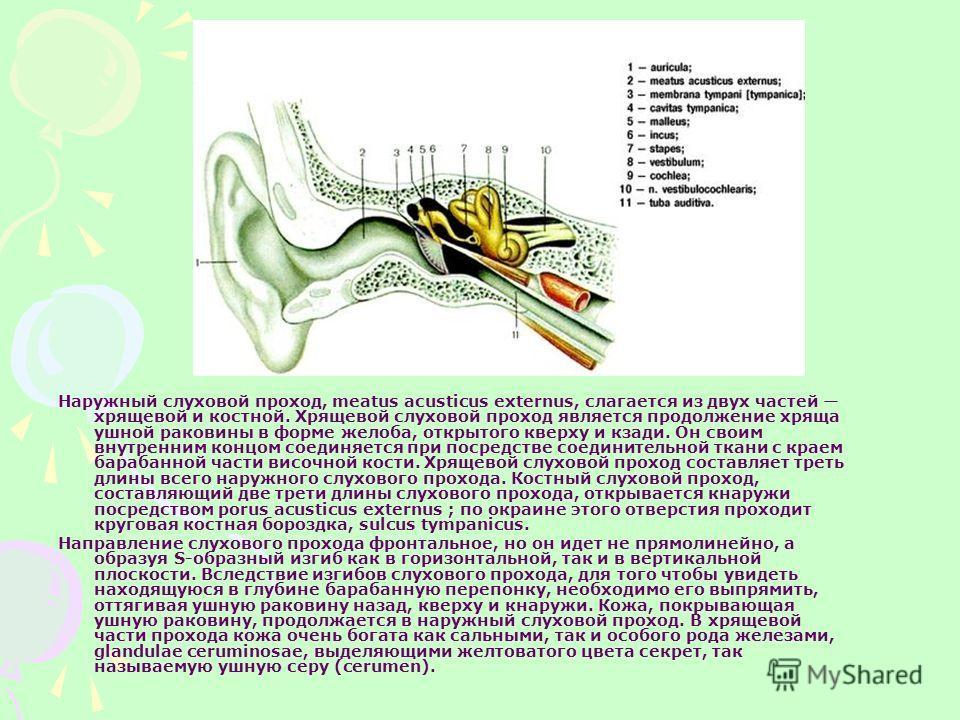 Наружный слуховой проход, meatus асusticus externus, слагается из двух частей хрящевой и костной. Хрящевой слуховой проход является продолжение хряща ушной раковины в форме желоба, открытого кверху и кзади. Он своим внутренним концом соединяется при