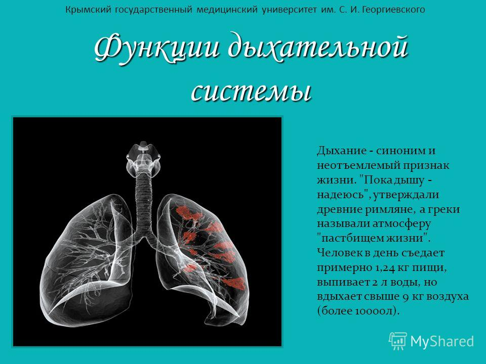 Функции дыхательной системы Дыхание - синоним и неотъемлемый признак жизни.