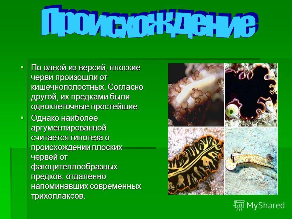 По одной из версий, плоские черви произошли от кишечнополостных. Согласно другой, их предками были одноклеточные простейшие. По одной из версий, плоские черви произошли от кишечнополостных. Согласно другой, их предками были одноклеточные простейшие.