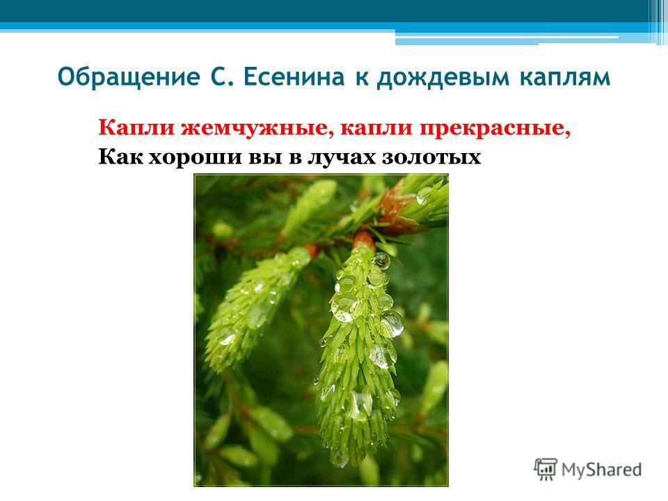 Обращение С. Есенина к дождевым каплям Капли жемчужные, капли прекрасные, Как хороши вы в лучах золотых