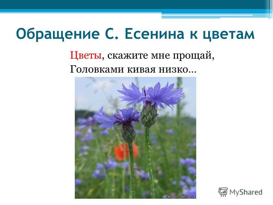 Обращение С. Есенина к цветам Цветы, скажите мне прощай, Головками кивая низко…