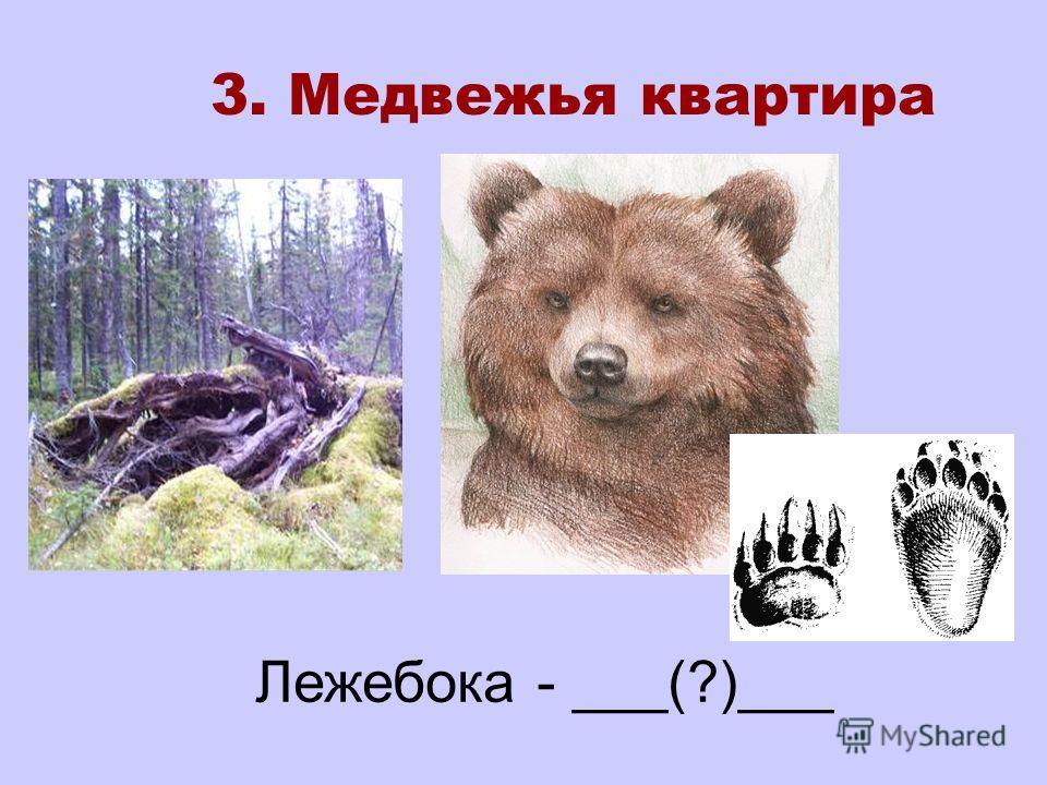 Лежебока - ___(?)___ 3. Медвежья квартира