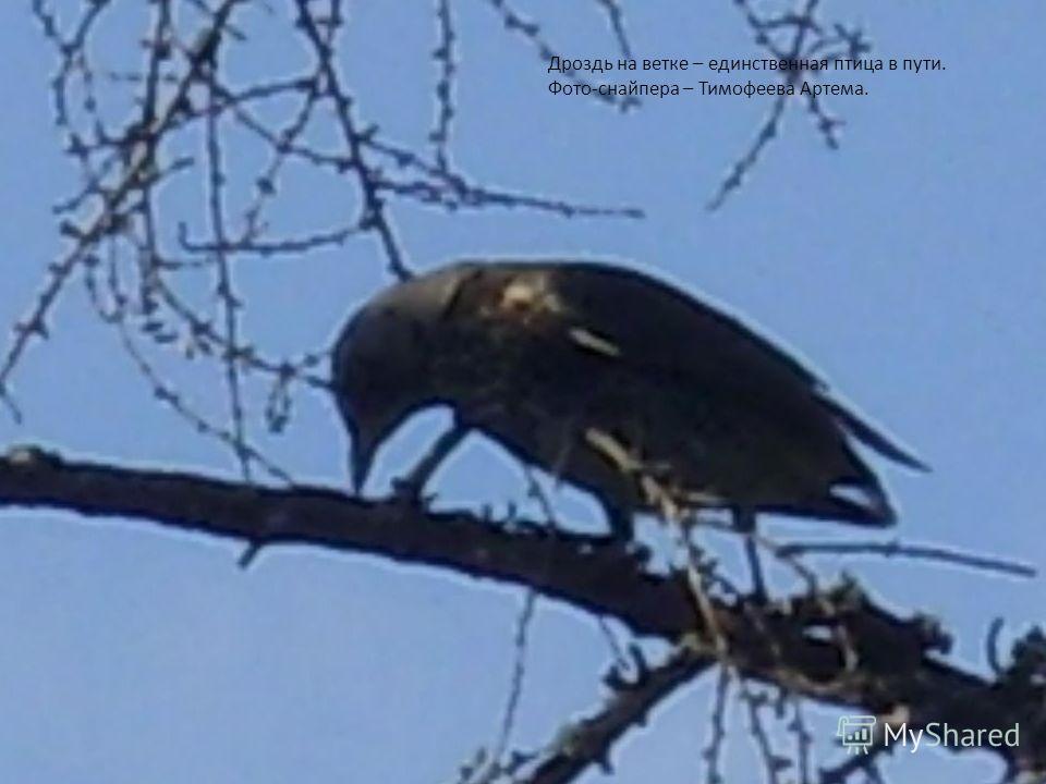 17 Дроздь на ветке – единственная птица в пути. Фото-снайпера – Тимофеева Артема.