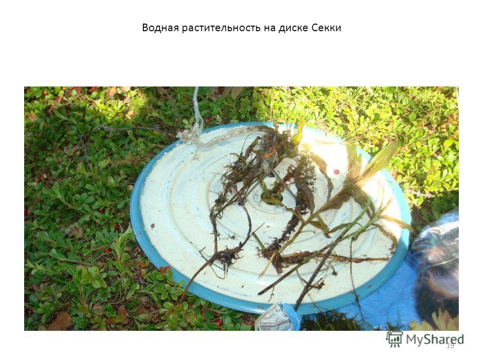 19 Водная растительность на диске Секки
