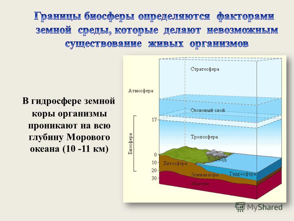 В гидросфере земной коры организмы проникают на всю глубину Морового океана (10 -11 км)