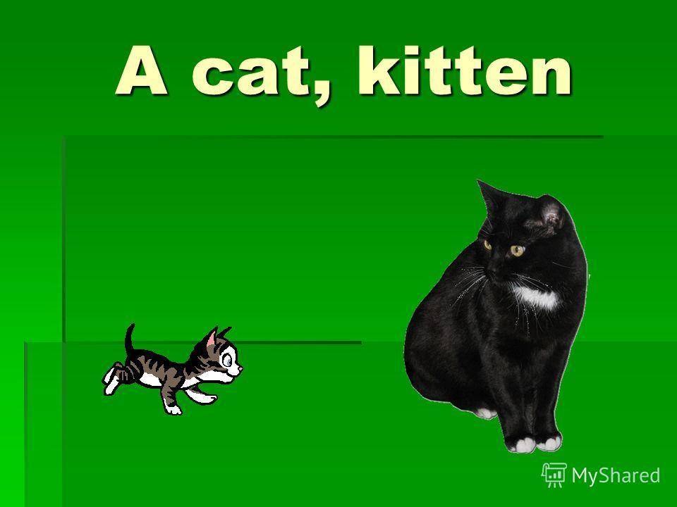 A cat, kitten