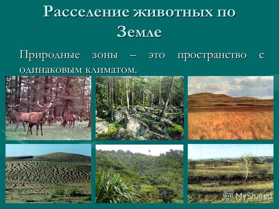 Расселение животных по Земле Природные зоны – это пространство с одинаковым климатом.