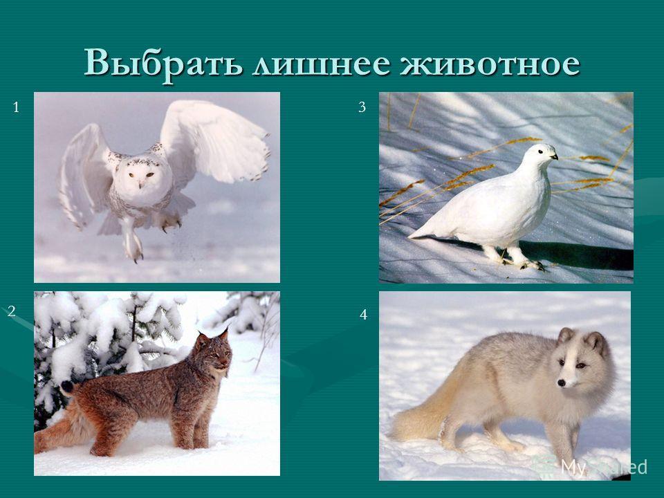 Выбрать лишнее животное 1 2 3 4