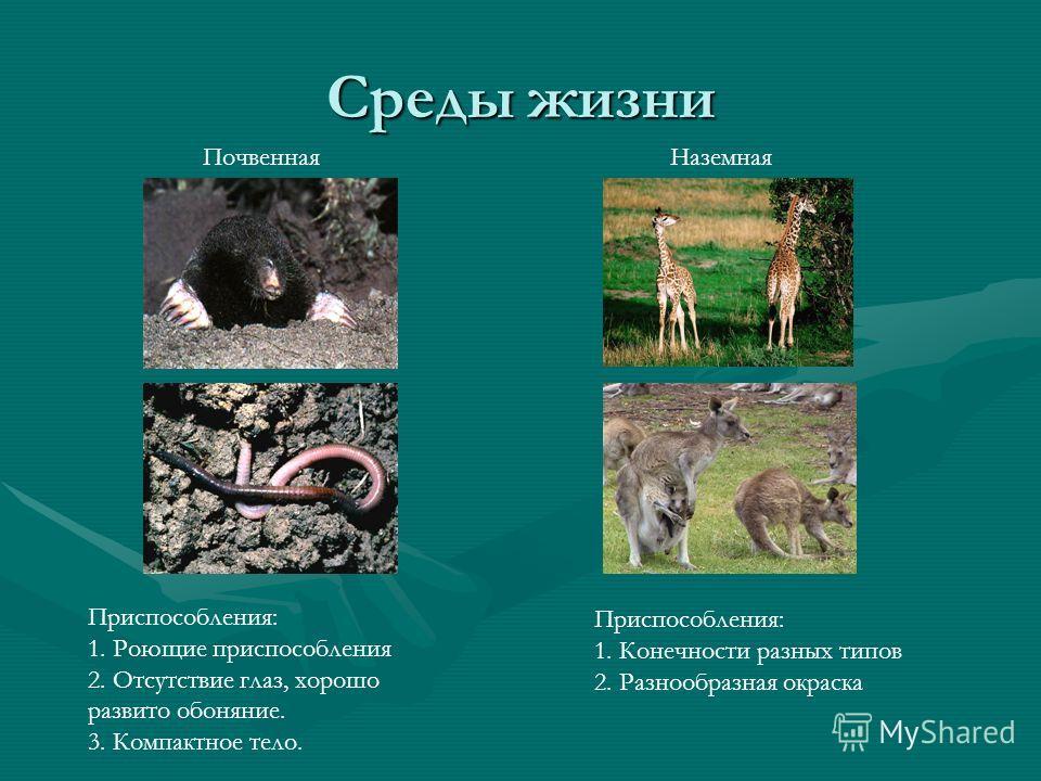 Среды жизни ПочвеннаяНаземная Приспособления: 1. Роющие приспособления 2. Отсутствие глаз, хорошо развито обоняние. 3. Компактное тело. Приспособления: 1. Конечности разных типов 2. Разнообразная окраска