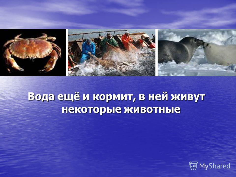 Вода ещё и кормит, в ней живут некоторые животные