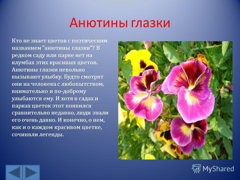 Анютины глазки Кто не знает цветов с поэтическим названием