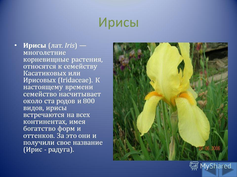 Ирисы Ирисы ( лат. Iris) многолетние корневищные растения, относятся к семейству Касатиковых или Ирисовых (Iridaceae). К настоящему времени семейство насчитывает около ста родов и 800 видов, ирисы встречаются на всех континентах, имея богатство форм