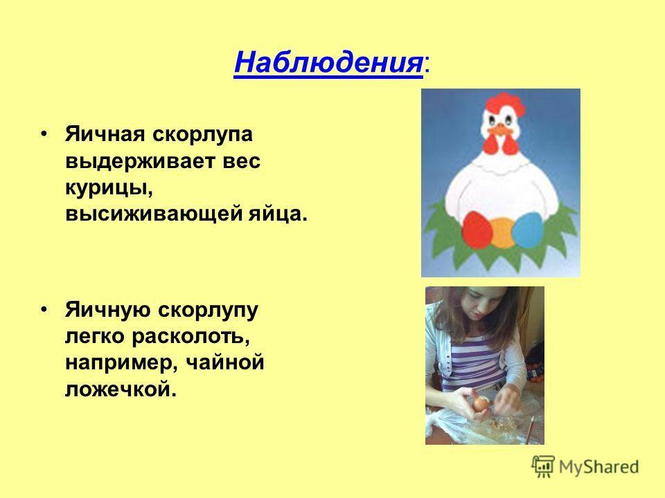 Наблюдения: Яичная скорлупа выдерживает вес курицы, высиживающей яйца. Яичную скорлупу легко расколоть, например, чайной ложечкой.