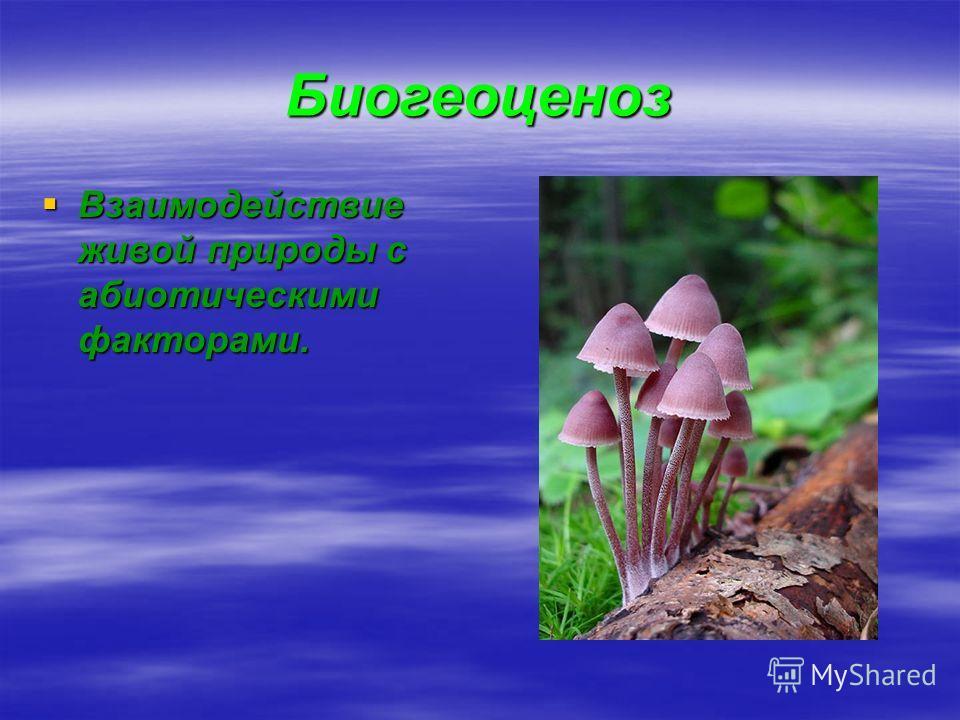 Биогеоценоз Взаимодействие живой природы с абиотическими факторами. Взаимодействие живой природы с абиотическими факторами.
