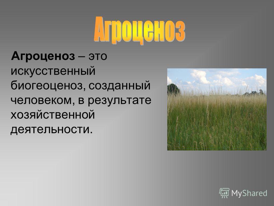 Агроценоз – это искусственный биогеоценоз, созданный человеком, в результате хозяйственной деятельности.