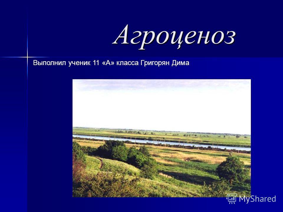 Агроценоз Агроценоз Выполнил ученик 11 «А» класса Григорян Дима