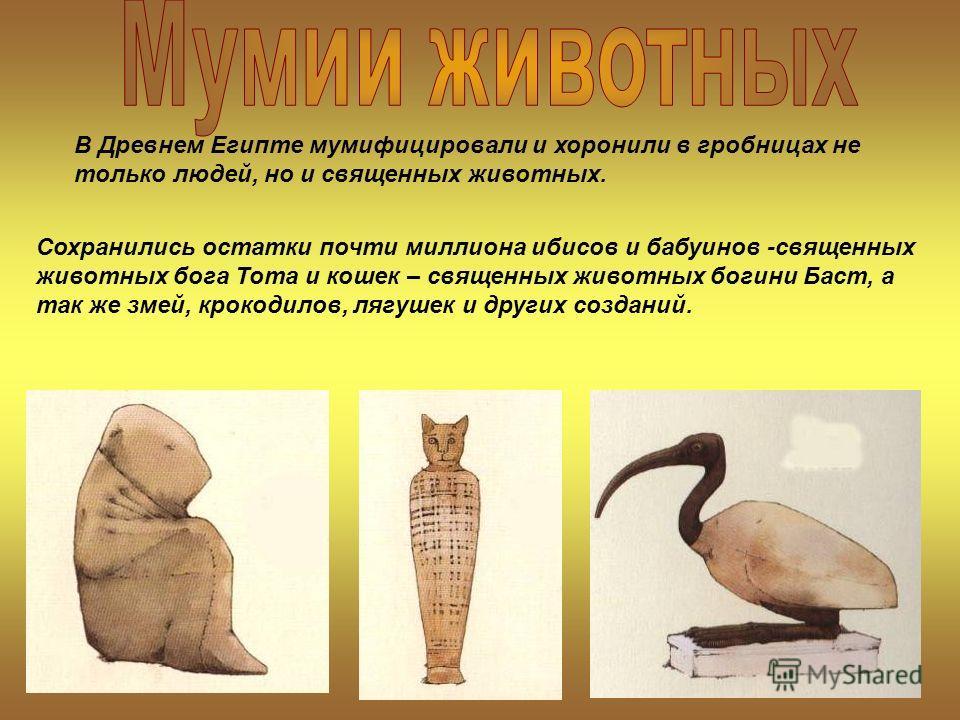 Сохранились остатки почти миллиона ибисов и бабуинов -священных животных бога Тота и кошек – священных животных богини Баст, а так же змей, крокодилов, лягушек и других созданий. В Древнем Египте мумифицировали и хоронили в гробницах не только людей,