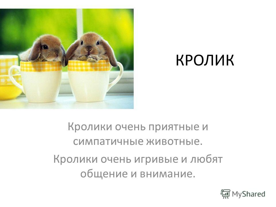 Кролики очень приятные и симпатичные животные. Кролики очень игривые и любят общение и внимание. КРОЛИК