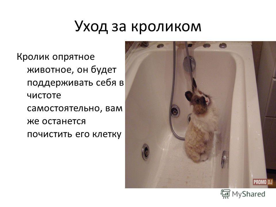 Уход за кроликом Кролик опрятное животное, он будет поддерживать себя в чистоте самостоятельно, вам же останется почистить его клетку