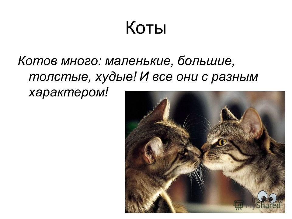 Коты Котов много: маленькие, большие, толстые, худые! И все они с разным характером!