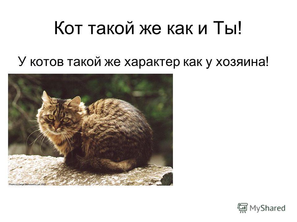 Кот такой же как и Ты! У котов такой же характер как у хозяина!