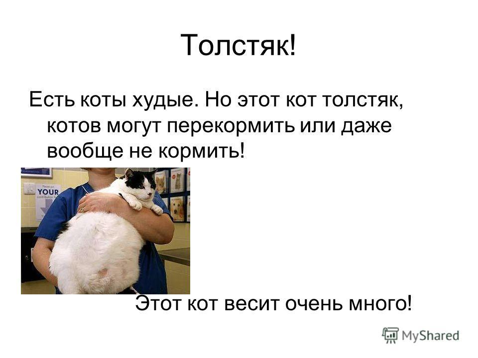 Толстяк! Есть коты худые. Но этот кот толстяк, котов могут перекормить или даже вообще не кормить! Этот кот весит очень много!