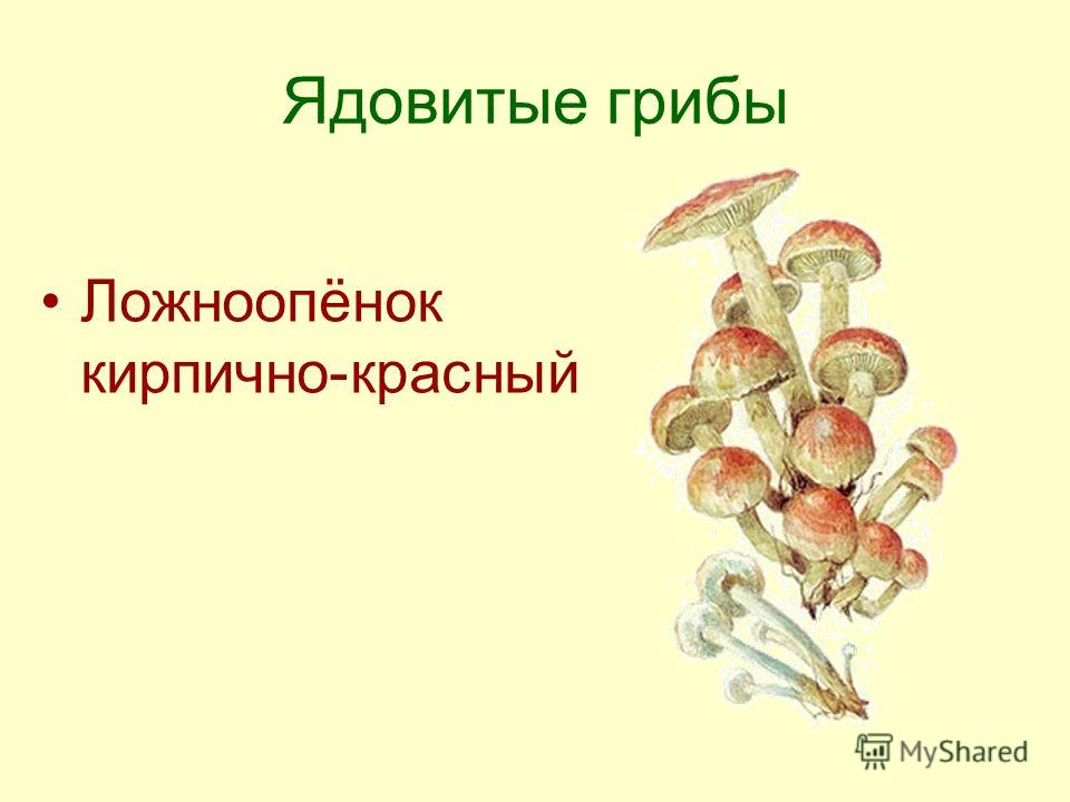 Ядовитые грибы Ложноопёнок кирпично-красный