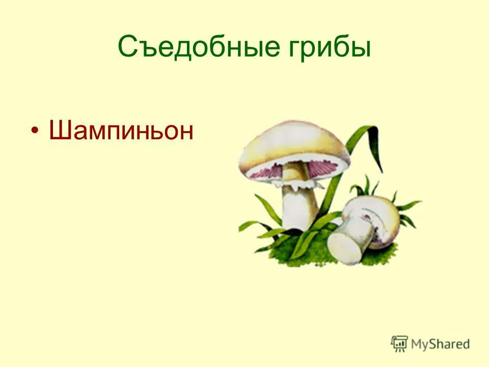 Съедобные грибы Шампиньон