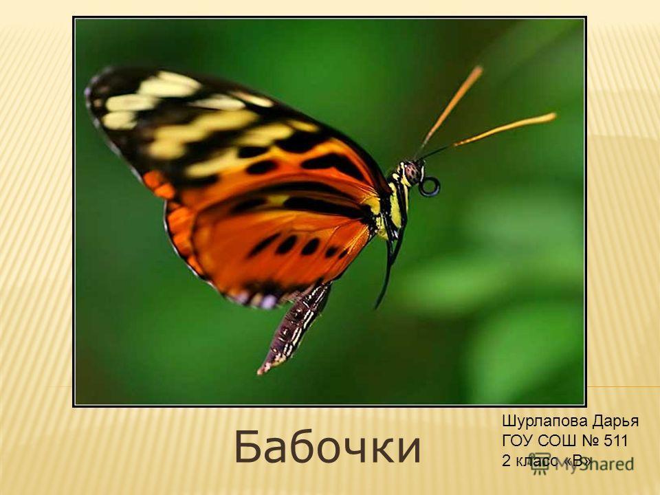 Бабочки Шурлапова Дарья ГОУ СОШ 511 2 класс «В»