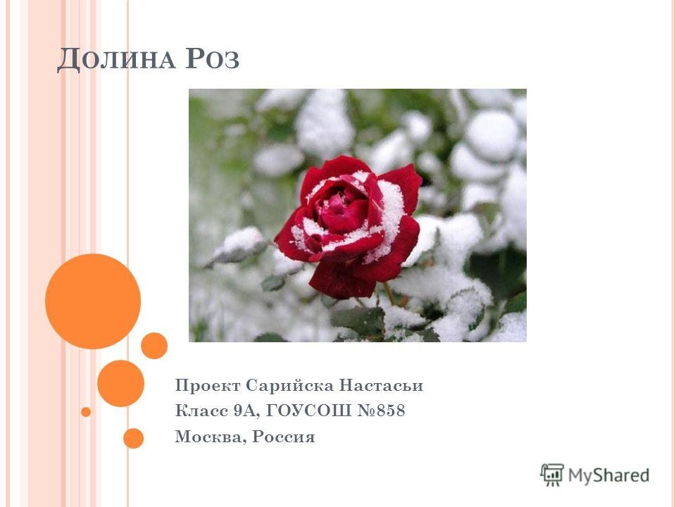 Д ОЛИНА Р ОЗ Проект Сарийска Настасьи Класс 9А, ГОУСОШ 858 Москва, Россия