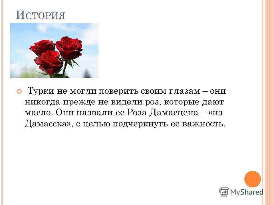 И СТОРИЯ Турки не могли поверить своим глазам – они никогда прежде не видели роз, которые дают масло. Они назвали ее Роза Дамасцена – «из Дамасска», с целью подчеркнуть ее важность.
