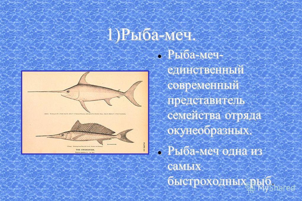 1)Рыба-меч. Рыба-меч- единственный современный представитель семейства отряда окунеобразных. Рыба-меч- единственный современный представитель семейства отряда окунеобразных. Рыба-меч одна из самых быстроходных рыб. Рыба-меч одна из самых быстроходных