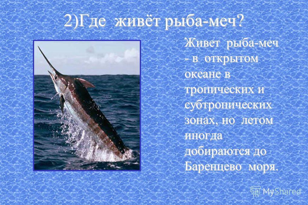 2)Где живёт рыба-меч? Живет рыба-меч - в открытом океане в тропических и субтропических зонах, но летом иногда добираются до Баренцево моря. Живет рыба-меч - в открытом океане в тропических и субтропических зонах, но летом иногда добираются до Баренц
