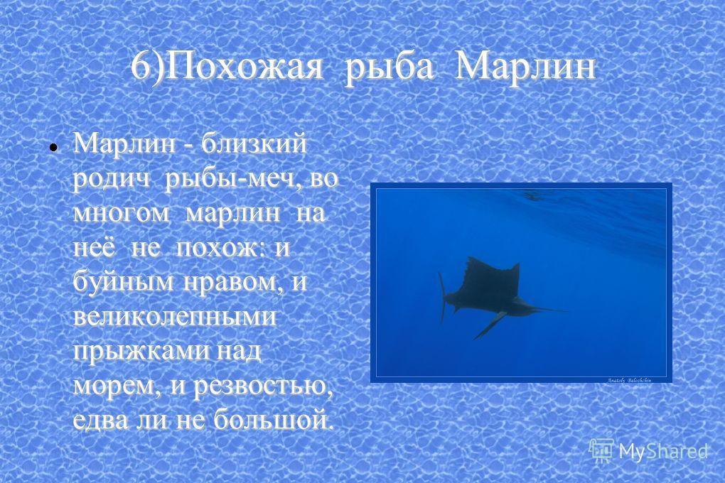 6)Похожая рыба Марлин Марлин - близкий родич рыбы-меч, во многом марлин на неё не похож: и буйным нравом, и великолепными прыжками над морем, и резвостью, едва ли не большой. Марлин - близкий родич рыбы-меч, во многом марлин на неё не похож: и буйным