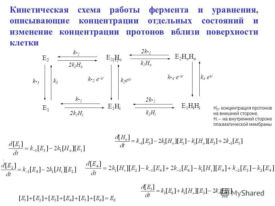 k- 2 e - E1E1 E2E2 E1HiE1Hi E1HiHiE1HiHi E 2 H o E2HoHoE2HoHo 2k 1 H i k1Hik1Hi 2k- 1 k- 1 k1Hok1Ho 2k 1 H o 2k- 1 k- 1 k 2 e k 4 e k- 4 e - k- 3 k3k3 Кинетическая схема работы фермента и уравнения, описывающие концентрации отдельных состояний и изме