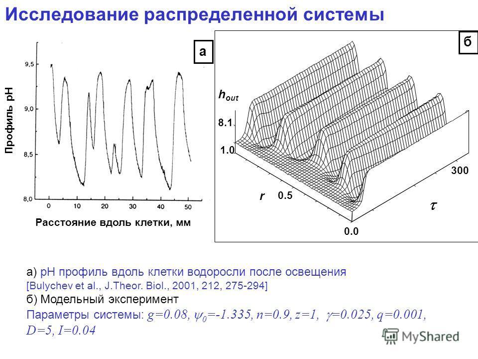 Исследование распределенной системы Профиль рН Расстояние вдоль клетки, мм а) pH профиль вдоль клетки водоросли после освещения [Bulychev et al., J.Theor. Biol., 2001, 212, 275-294] б) Модельный эксперимент Параметры системы: g=0.08, 0 =-1.335, n=0.9