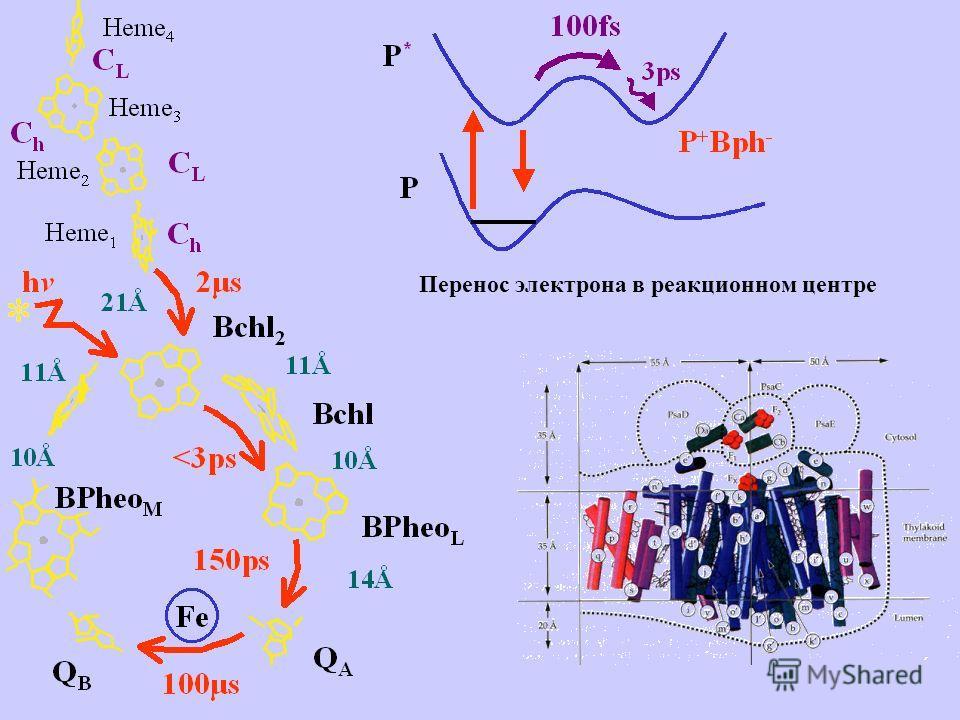 Перенос электрона в реакционном центре