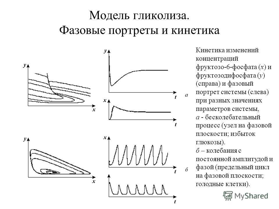 Модель гликолиза. Фазовые портреты и кинетика Кинетика изменений концентраций фруктозо 6 фосфата (х) и фруктозодифосфата (у) (справа) и фазовый портрет системы (слева) при разных значениях параметров системы, а бесколебательный процесс (узел на фазов