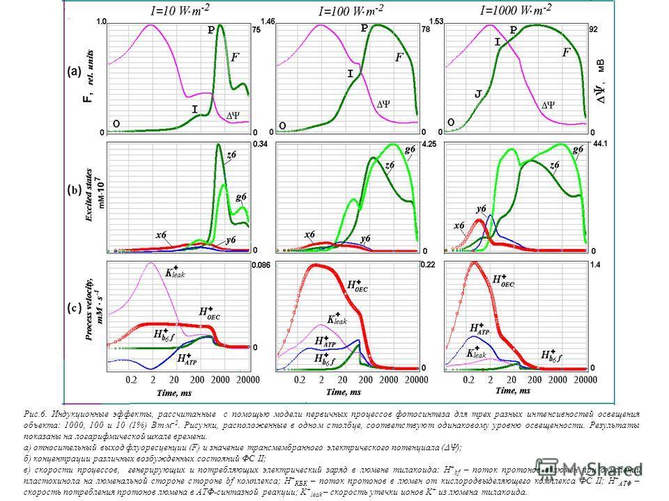 Рис.6. Индукционные эффекты, рассчитанные с помощью модели первичных процессов фотосинтеза для трех разных интенсивностей освещения объекта: 1000, 100 и 10 (1%) Вт м –2. Рисунки, расположенные в одном столбце, соответствуют одинаковому уровню освещен