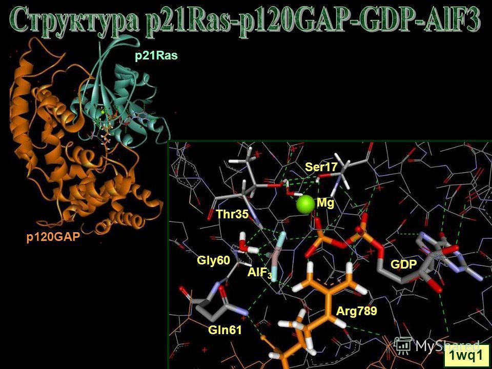 p21Ras Mg Gln61 GDP Ser17 Gly60 Thr35 1wq1 Arg789 AlF 3 p120GAP