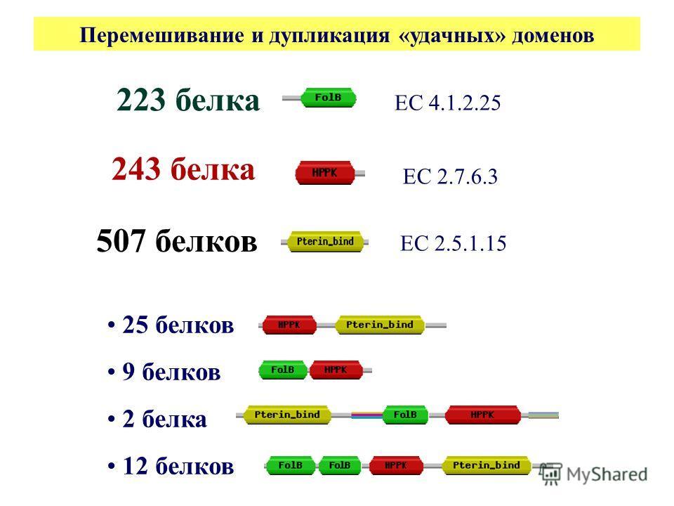 25 белков 9 белков 2 белка 12 белков 223 белка 243 белка 507 белков ЕС 2.5.1.15 ЕС 4.1.2.25 ЕС 2.7.6.3 Перемешивание и дупликация «удачных» доменов
