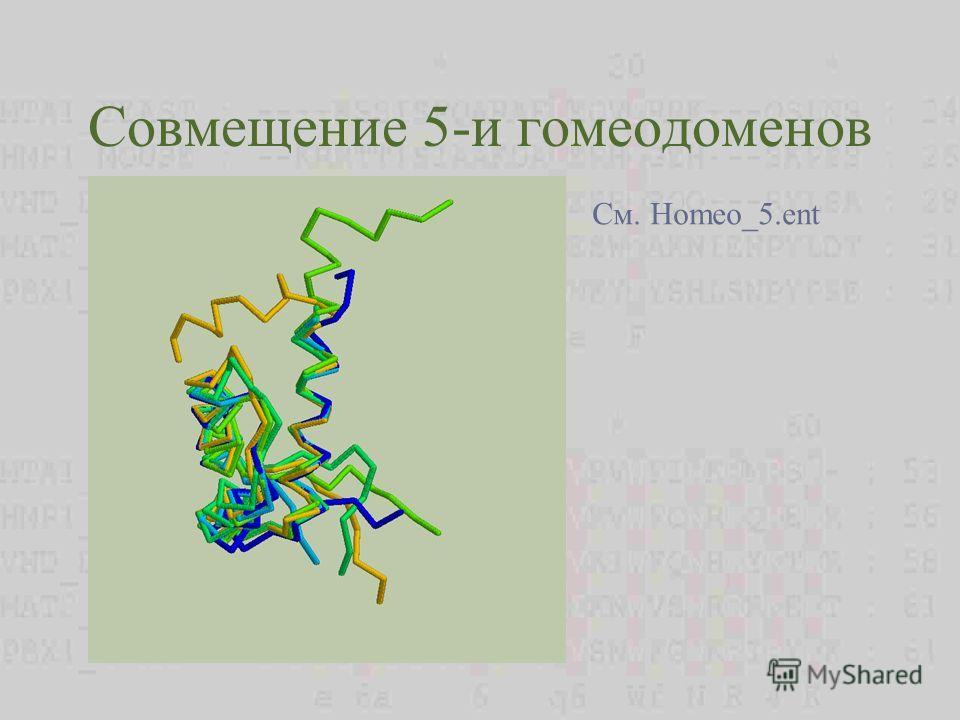 Совмещение 5-и гомеодоменов См. Homeo_5.ent