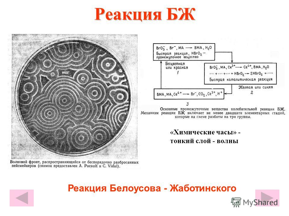Реакция БЖ «Химические часы» - тонкий слой - волны Реакция Белоусова - Жаботинского
