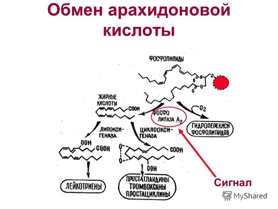 Обмен арахидоновой кислоты Сигнал