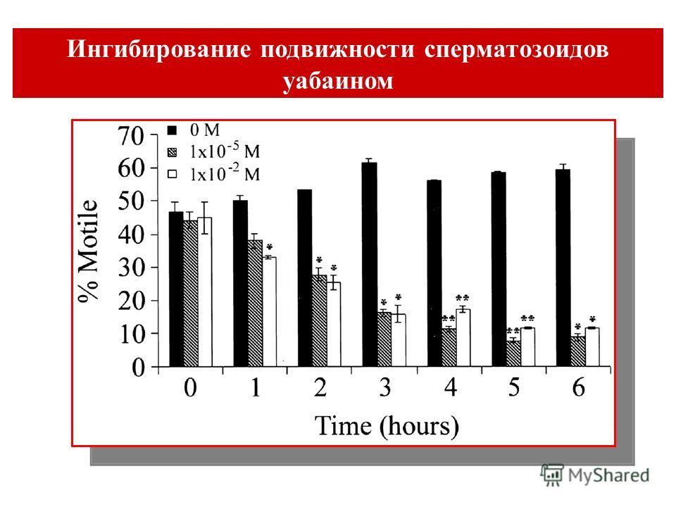 Ингибирование подвижности сперматозоидов уабаином